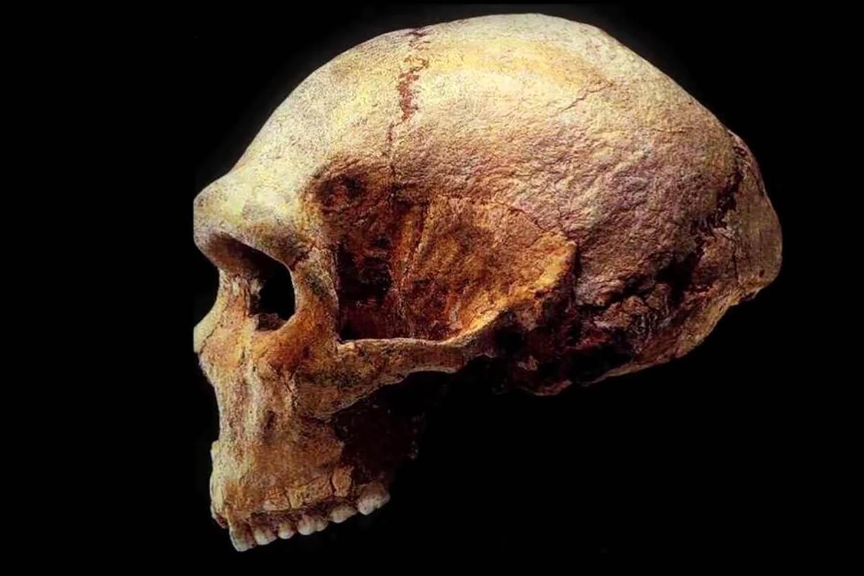 O σύγχρονος άνθρωπος προέρχεται από την Ελλάδα πριν 17.000.000 εκατ. χρόνια